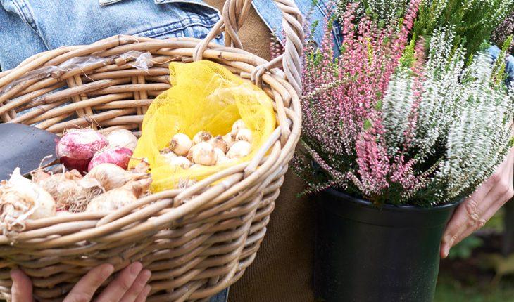 Herbstblumenzwiebeln pflanzen