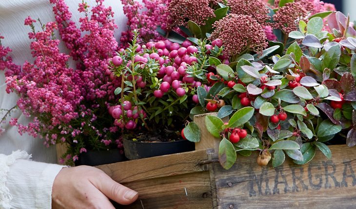 Herbstliche Kübelpflanzen