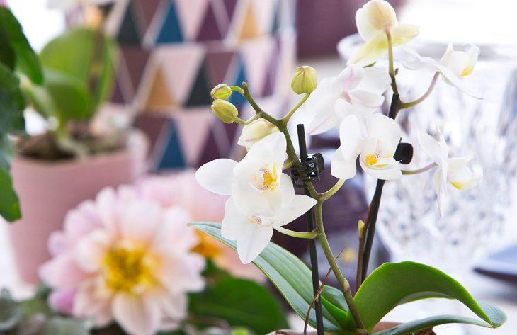 Orchideen - Farbtuper zum wohlfühlen