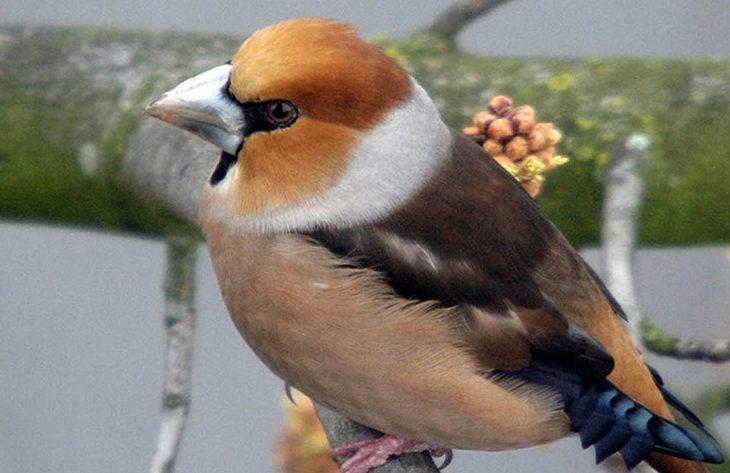 Vogelfütterung ganzjährig richtig Ratgeber