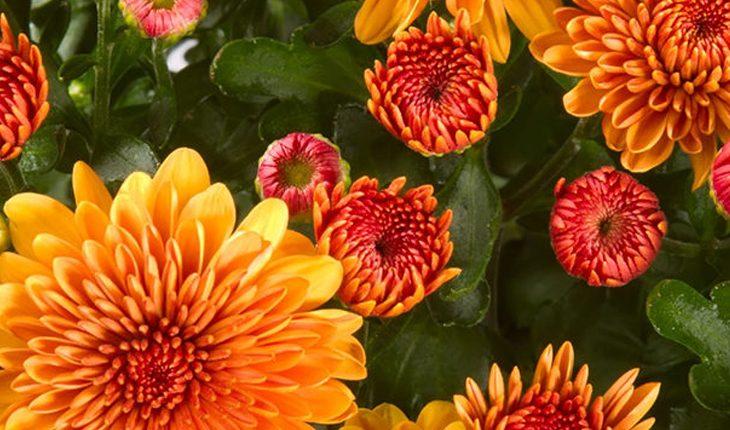 Winterharte Sommerblüher